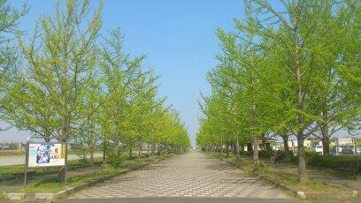 加須はなさき公園 加須はなさき水城公園(埼玉県加須市)
